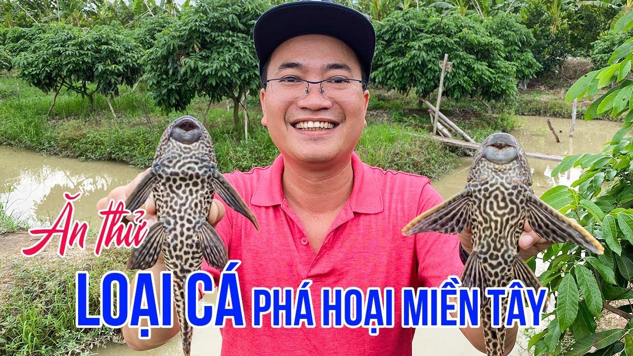 kham-pha-cuoc-song-dao-dai-loan-va-mon-ngon-tu-loai-ca-pha-hoai-nhat-viet-nam