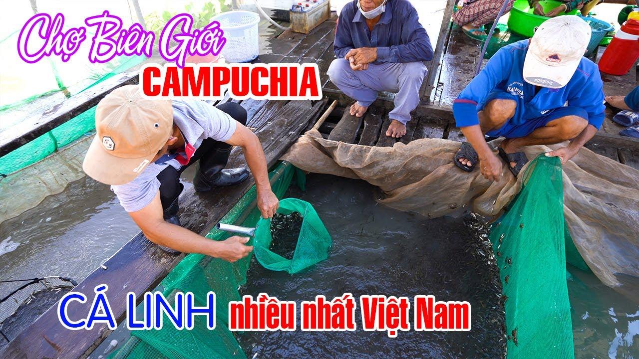 Khám phá Chợ Biên Giới Campuchia mùa nước nổi nơi Cá Linh nhiều nhất Việt Nam | DU LỊCH AN GIANG