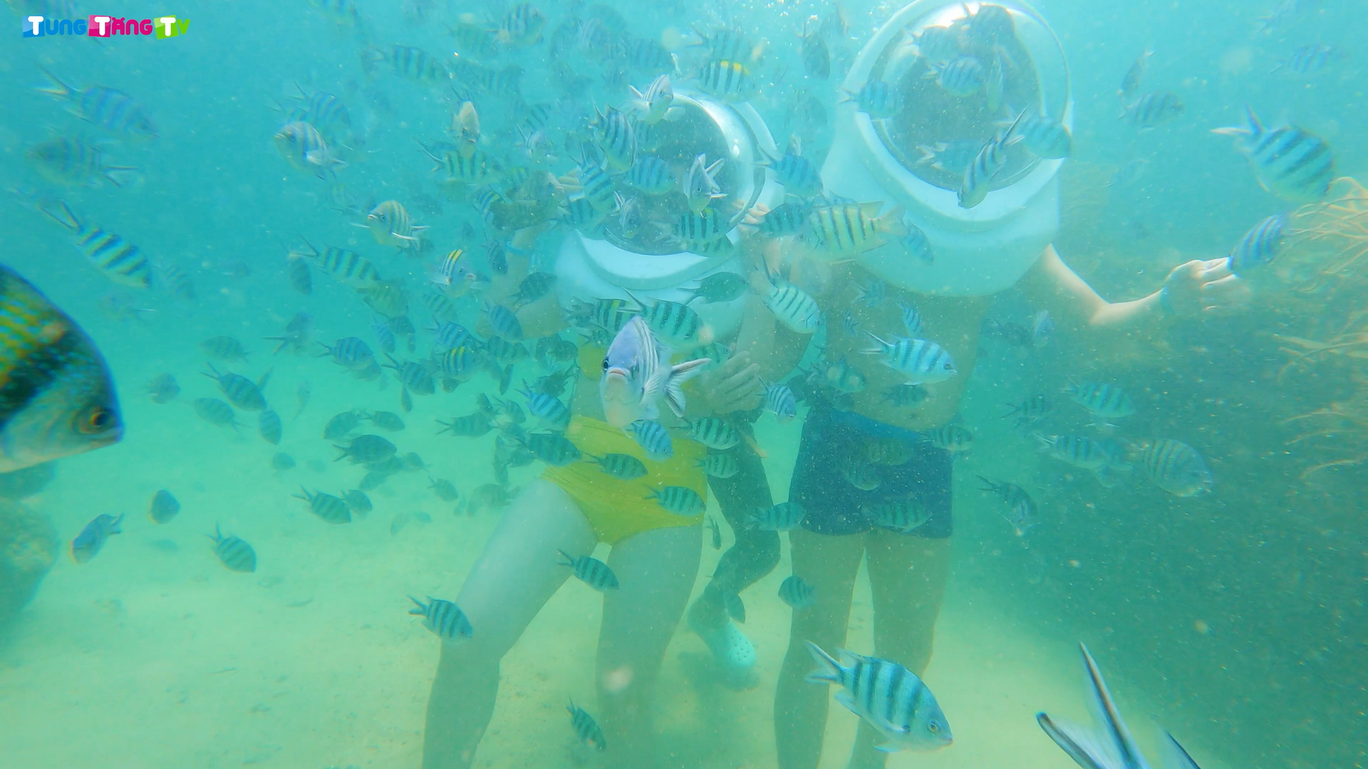 DU LỊCH PHÚ QUỐC   Đi bộ dưới đáy biển và Lặn ngắm Công viên San Hô tuyệt đẹp